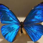 世界中の美しい蝶わくわくランキング